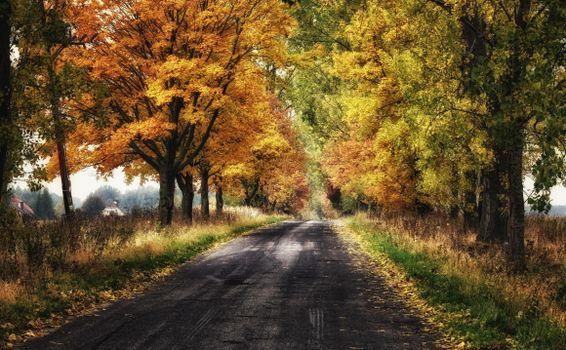 Бесплатные фото осень,дорога,деревья,пейзаж,Польша