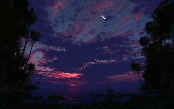 Фото бесплатно пальмовые деревья, небо, ночь