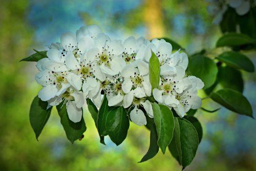 Photo free flowers, tree, spring