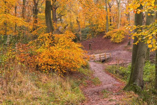 Фото бесплатно лес, овраг, деревья