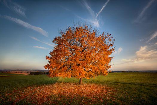 Photo free autumn leaf fall, nature, single tree