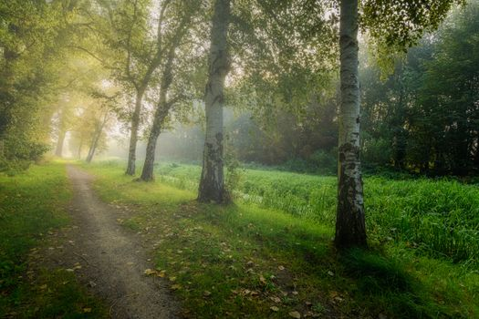 Photo free fog, path, birches