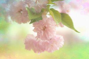 Фото бесплатно Beautiful Blossom, ветка цветов, цветок