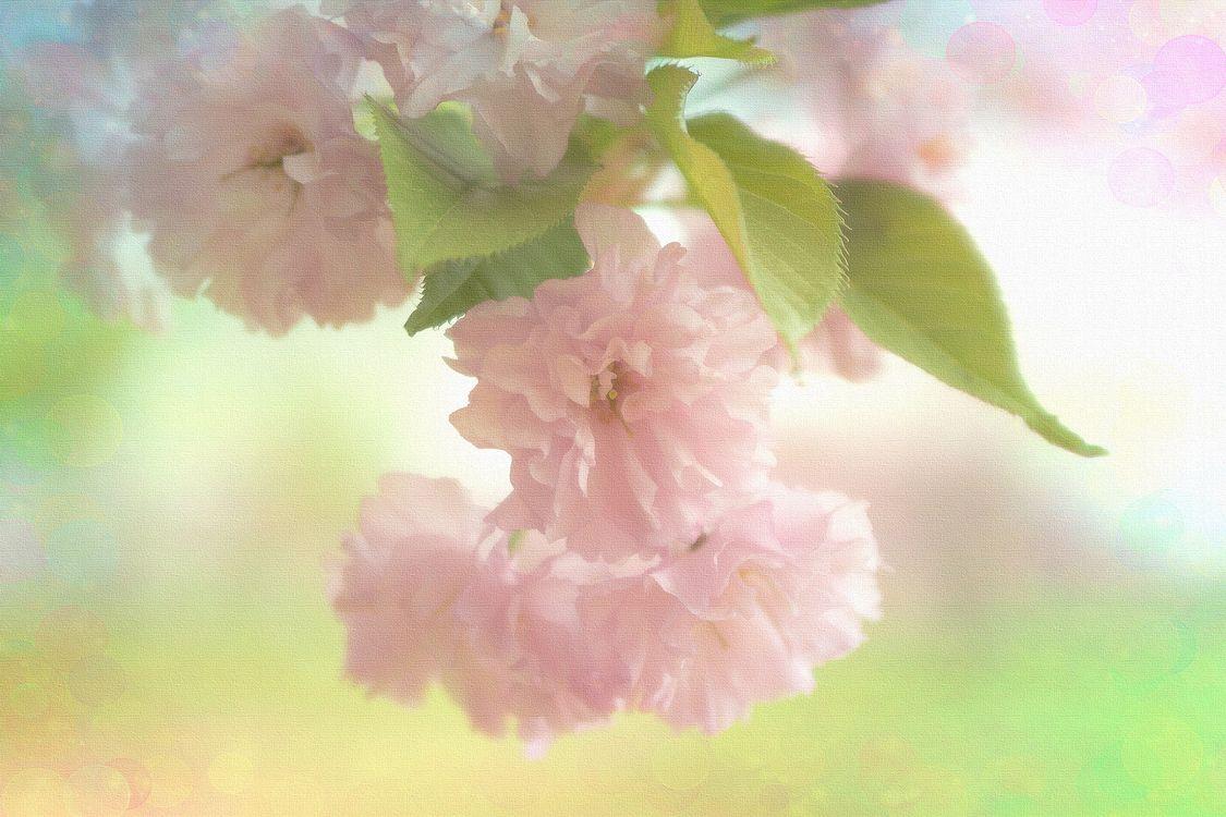 Free photo Beautiful blossom, flower branch, flower - to desktop