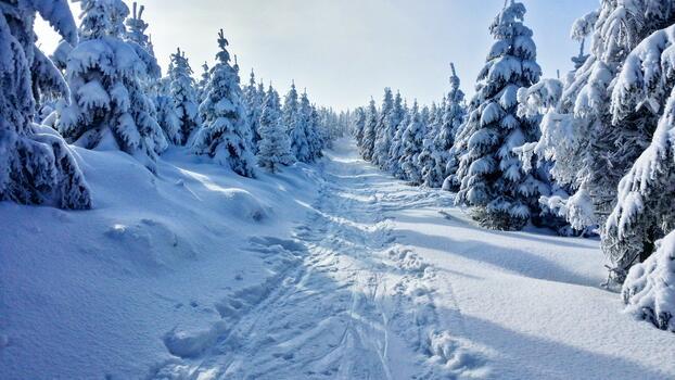 Photo free sky, skis, trail