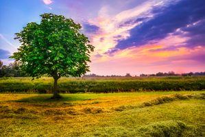 Фото бесплатно закат, солнца, поле