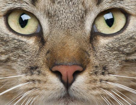 Photo free animal, cat, eyes
