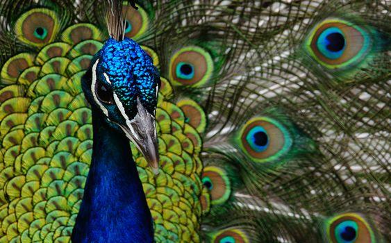 Photo free bird, wing, beak