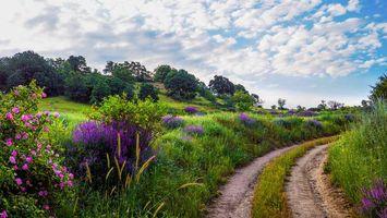 Бесплатные фото дорога,холмы,поле,цветы,деревья,пейзаж