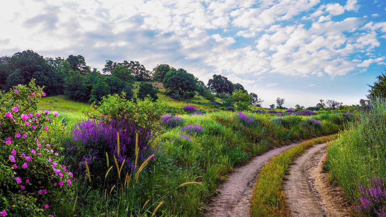 Фото бесплатно дорога, холмы, поле - на рабочий стол