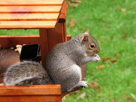 Photo free food, grass, squirrel