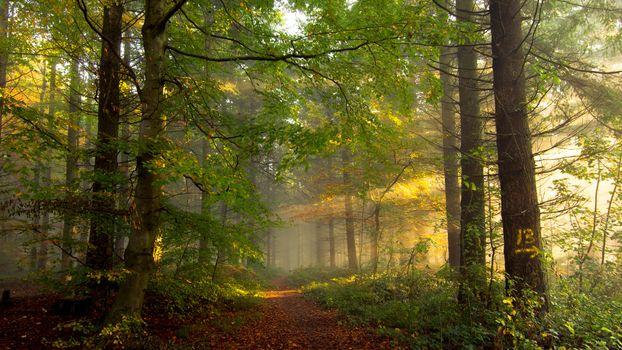 Заставки лес,деревья,солнечные лучи,дорога,природа