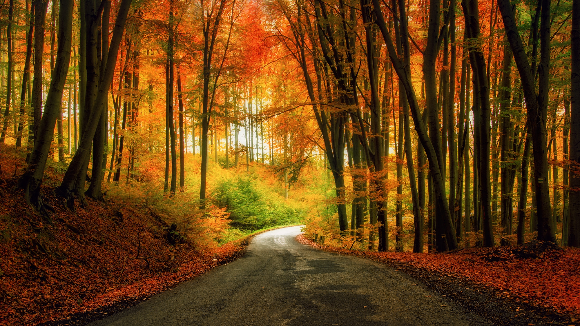 Скачать картинку лес, осень для рабочего стола бесплатно