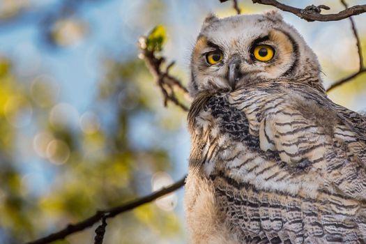 Photo free owl, feathers, boke