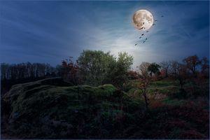 Фото бесплатно закат, планета, стая птиц