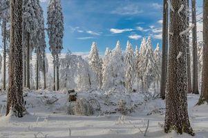Заставки зима,лес,деревья,снег,сугробы,пейзаж