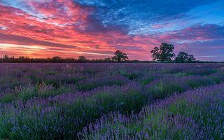 Бесплатные фото закат,поле,цветы,лаванда,пейзаж