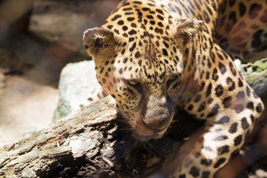 Photo free eyes, cheetah, sadness