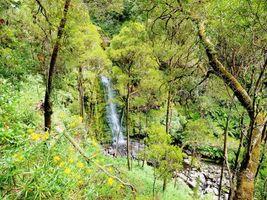 Бесплатные фото Австралия,Виктория,лес,деревья,водопад,природа