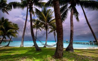 Бесплатные фото Пляж Киа Ора,Французская Полинезия,море,пальмы,берег,пейзаж