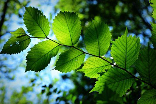 Фото бесплатно лист, листва, шаблон