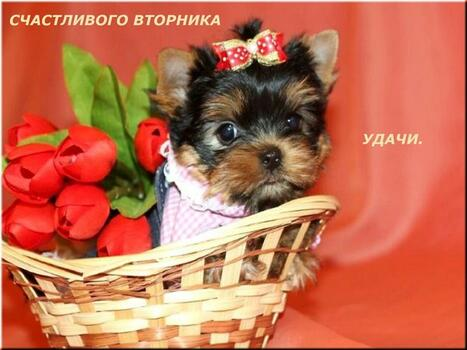 Postcard free tuesday, puppy, flowers