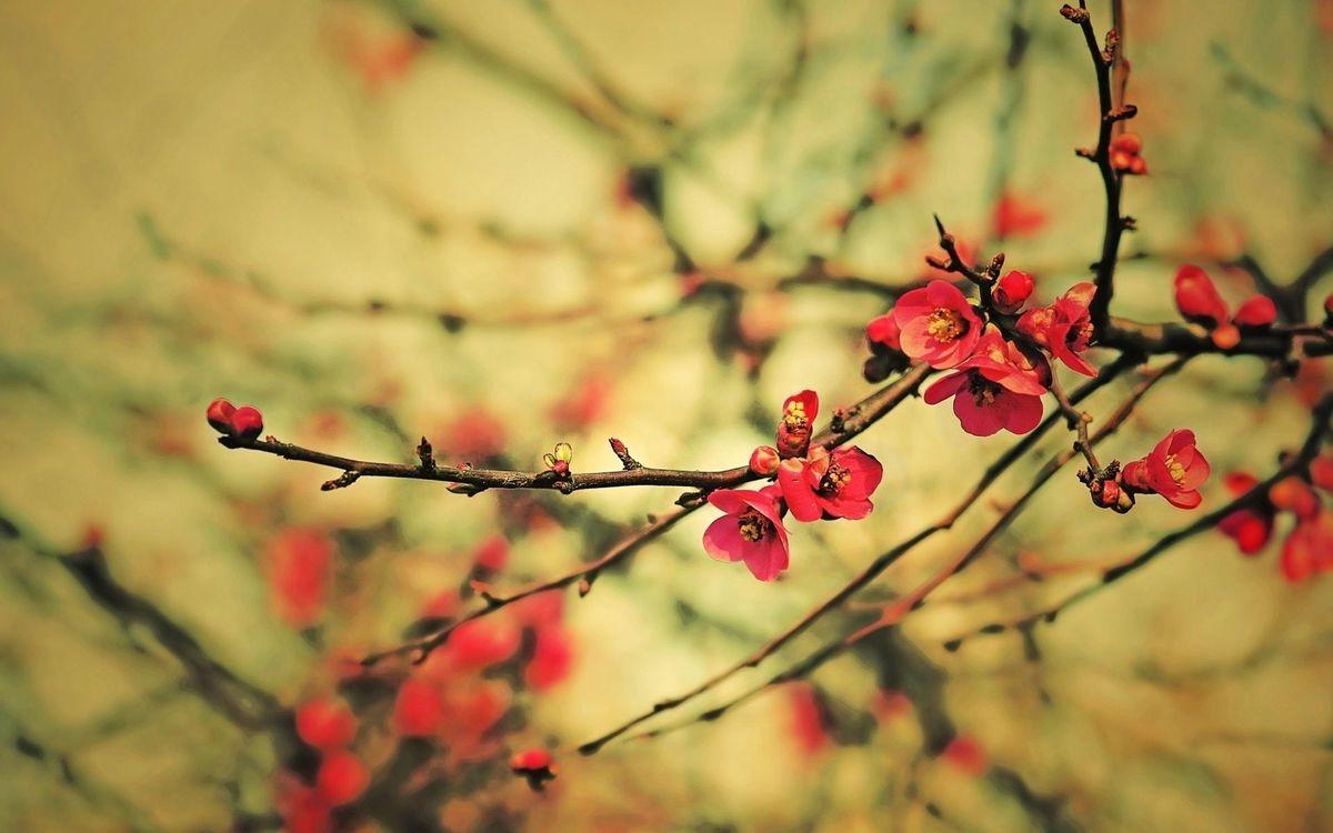 Фото цветок красный ветви - бесплатные картинки на Fonwall