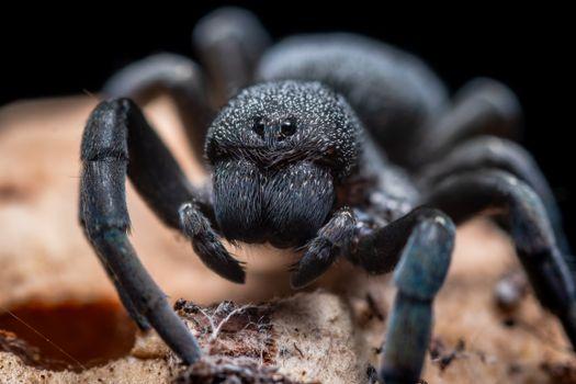 Фото бесплатно тарантул, паук, макро