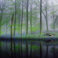 Бесплатные фото лес,деревья,туман,отражение,водоём,цветы,природа