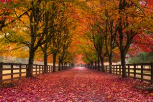 Фото бесплатно осень, дорога, деревья, листья, краски осени, золотая осень, природа, пейзаж