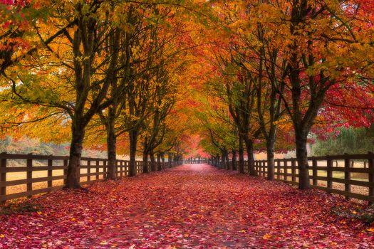 Бесплатные фото осень,дорога,деревья,листья,краски осени,золотая осень,природа,пейзаж