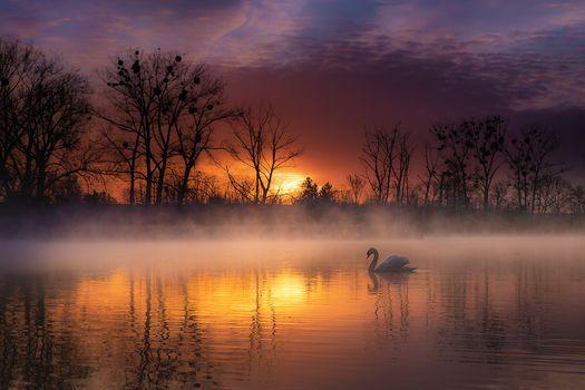 Фото бесплатно закат, Swan, пейзаж