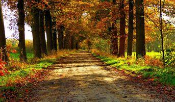 Фото бесплатно тропинка, листья, осень