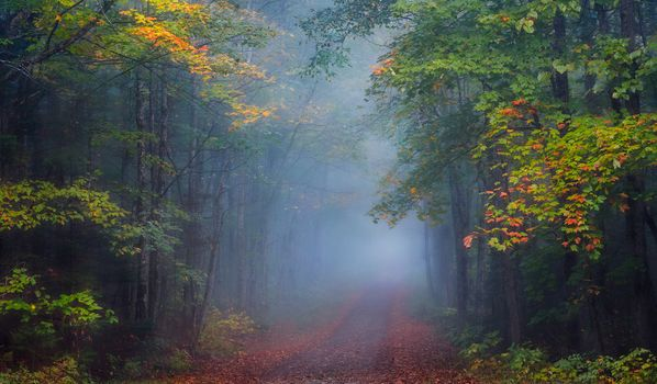 Free road, forest best photo