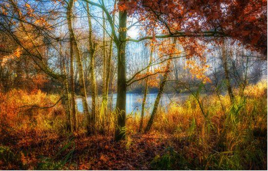 Фото бесплатно озера, осенние листья, пейзаж
