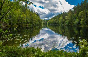 Фото бесплатно водоём, озеро, лес