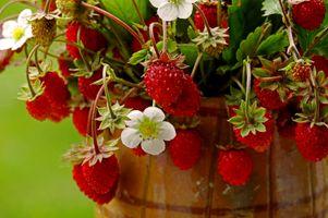 Фото бесплатно земляника, ягоды, цветы