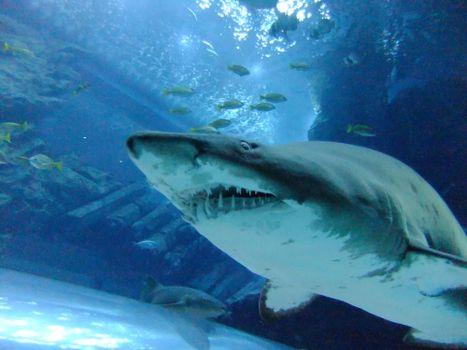 Wallpaper shark, sea high quality