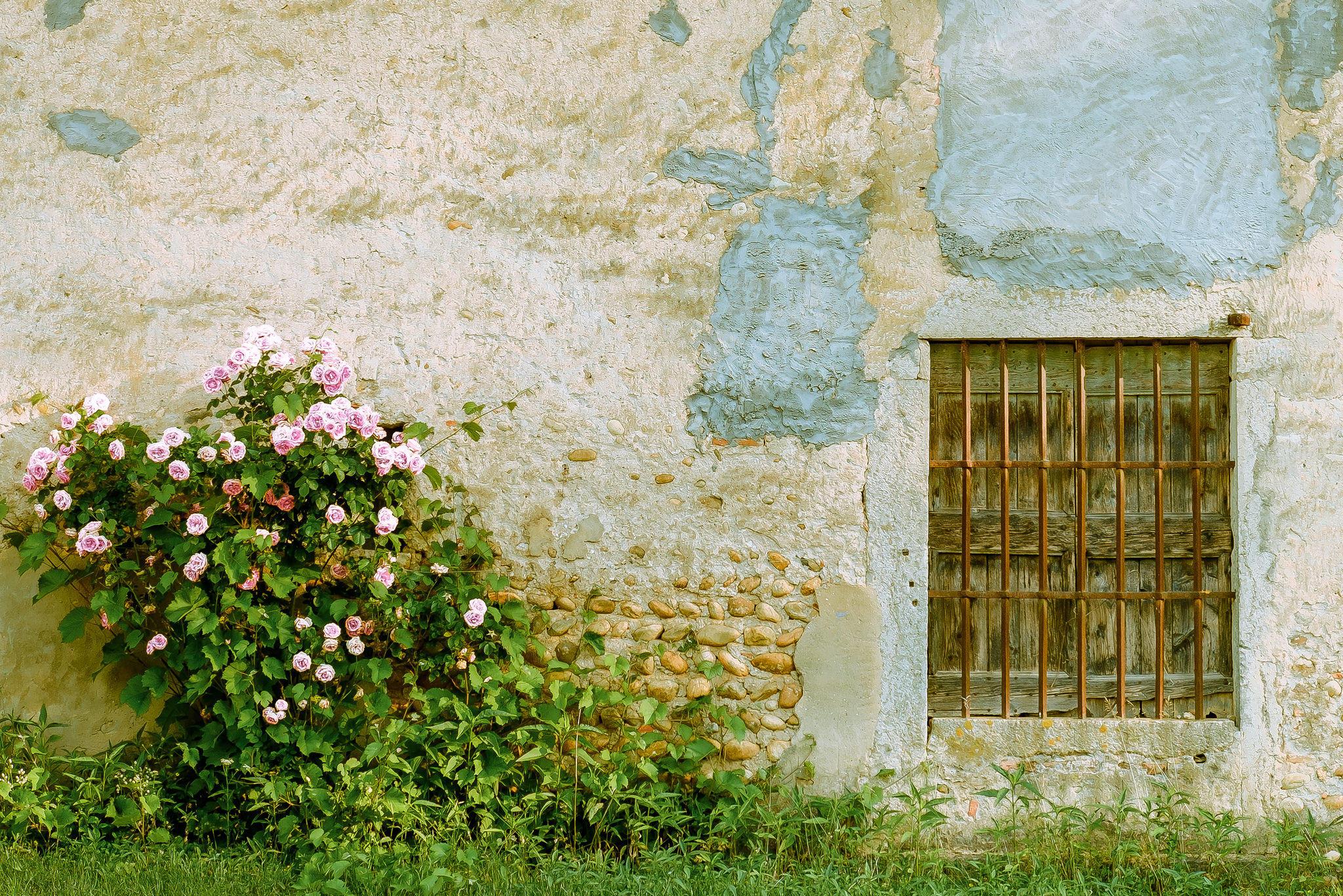 Обои здание, стена, кустарник, розы