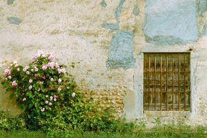 Фото бесплатно здание, стена, кустарник, розы, цветы, решётка