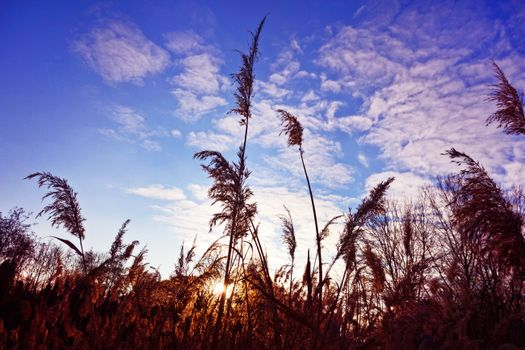 Autumn grass and sky