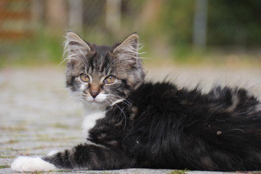 Фото бесплатно кошка, котенок, грязные