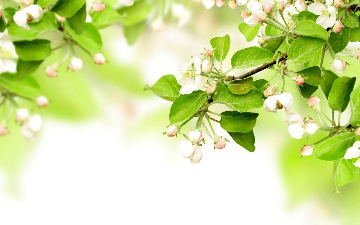 Фото бесплатно листья, ветви, недозрелый - на рабочий стол
