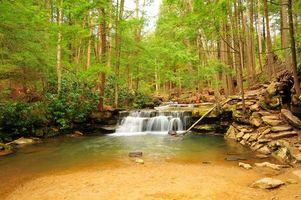 Бесплатные фото лес,деревья,речка,водопад,природа