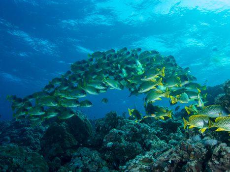 Фото бесплатно море, стая, морского дна