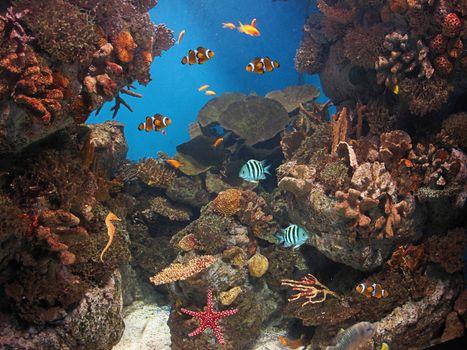 Заставки морское дно, рыбы, кораллы