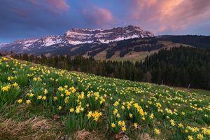 Бесплатные фото закат, поле, холм, горы, деревья, цветы, пейзаж