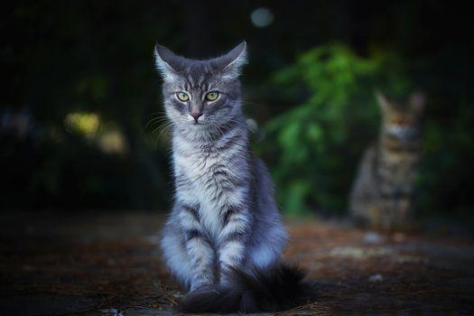 Photo free cat, cat, muzzle