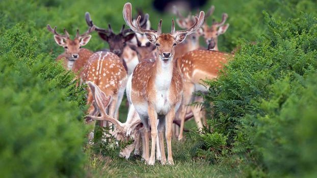Photo free deer, plants, wildlife