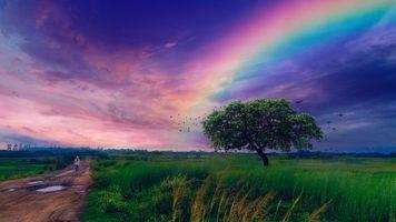 Фото бесплатно поле, радуга, после дождя
